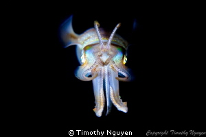 Squid at night by Timothy Nguyen 